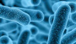 Bacteria de Legionella